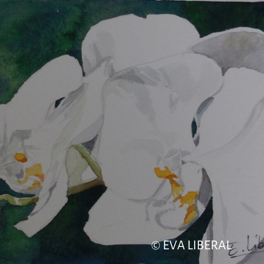 Acuarelas de Orquídeas Eva Liberal