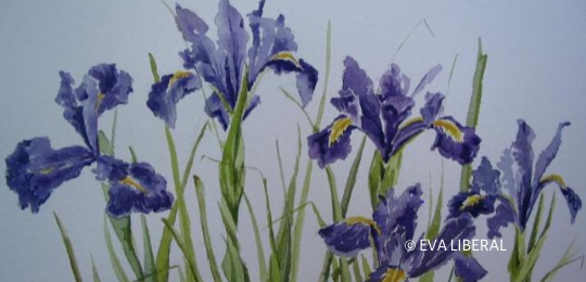 lirios acuarelas flores