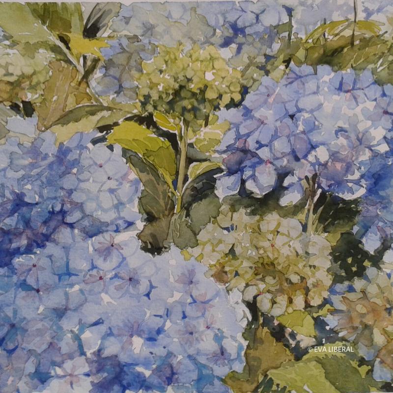 acuarelas flores hortensias azules eva liberal home3