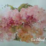 acuarelas hortensias rosas eva liberal